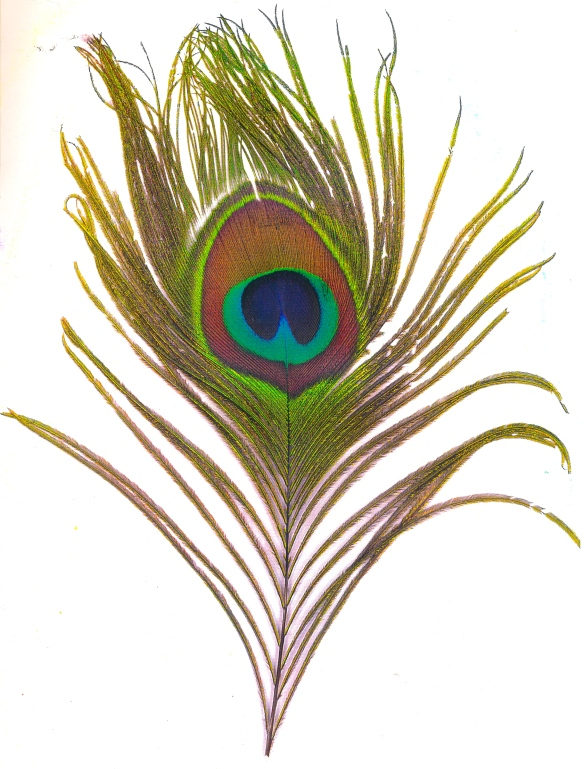 109 peacock copy