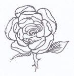 11. rose