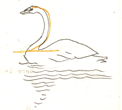 Swan, Letter Beit