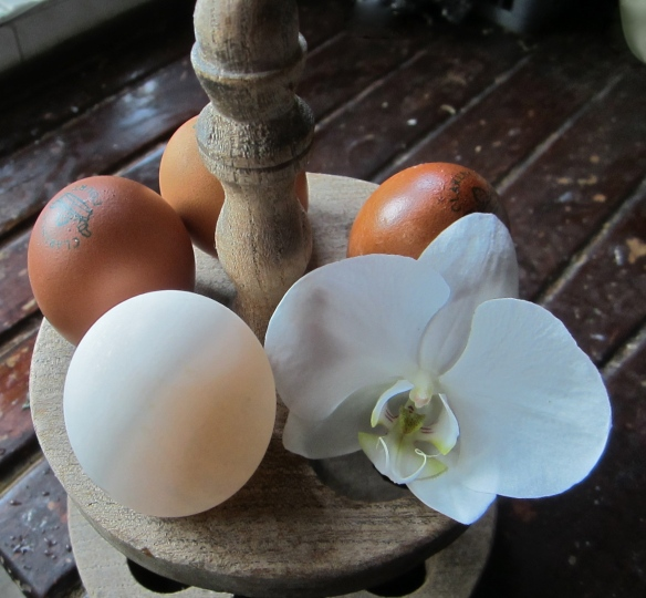 eggs and orchid