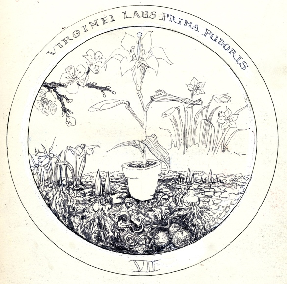 lily in earth Rosicrucean Emblem 7 -