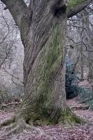 15a oak