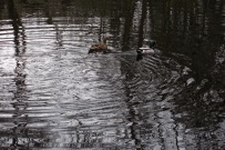 15i ducks