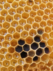 honeycomb solar hexagon